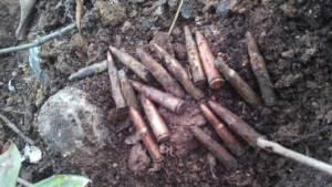 ผงะระเบิดยังเกลื่อน! ชาวบ้านทำไร่ชายแดนเขาพระวิหาร พบระเบิด กระสุนปืนซุกใต้ต้นไม้