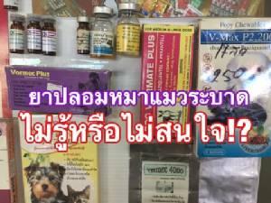 ไม่รู้หรือไม่สนใจ!? ยาปลอมน้องหมา-น้องเหมียวระบาดในไทย 15 ปี ไร้การแก้ไข