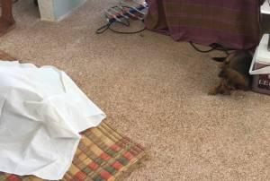 ขรก.ผวา! รปภ.นอนตายคา สนง.พัฒนาสังคมฯ สุรินทร์แห่งใหม่-สุนัขเฝ้าศพไม่ยอมห่าง (ชมคลิป)