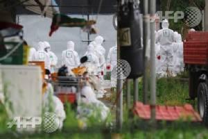 Culls, poultry transport ban as S. Korea fights bird flu outbreak