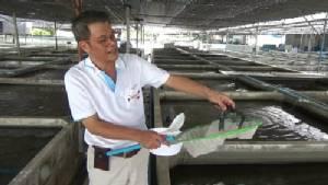 คนเลี้ยงกุ้งราชบุรีร้องขึ้นทะเบียนกุ้งเครฟิชก่อนซื้อขายทำวุ่น