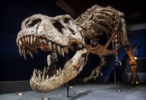 """อีกงานวิจัยยัน """"ทีเรกซ์"""" ไดโนเสาร์กินเนื้อมีเกล็ดไม่ใช่ขนนก"""