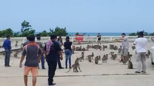ลิงเขาตะเกียบกว่า 3 พันตัว อาละวาดหนัก