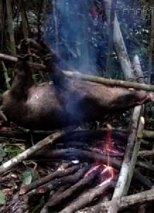 """ป่าต้นน้ำผืนสุดท้าย! สงขลา-สตูล สัตว์ยังถูกล่า ป่ายังถูกบุกรุกหนัก พบมี """"สมเสร็จ-เสือลายพาดกลอน"""" (มีคลิป)"""