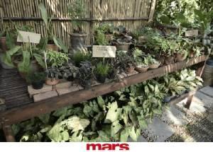 Patom Organic Living กรุงเทพฯ ธรรมชาติ และออร์แกนิค