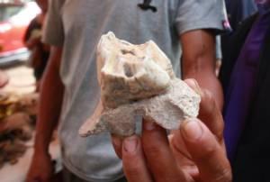 ฟันกรามใหญ่เท่าไข่ไก่! ชาวชัยภูมิแตกตื่นแห่ขอหวยโครงกระดูกมนุษย์โบราณร่างยักษ์ (ชมคลิป)
