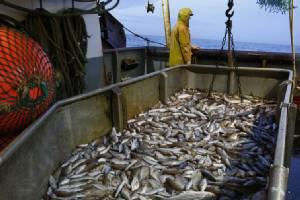 'ไทยยูเนี่ยน'ยักษ์ใหญ่อาหารทะเล  จับมือกลุ่ม'กรีนพีซ'  แก้ไขปัญหาจับปลามากเกินไป,  ละเมิดสิทธิคนงาน