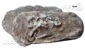 Oviraptorosaur dinosaurs