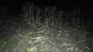 ช้างป่าบุกทำลายไร่สวนชาวบ้านคลองพอก จันทบุรี