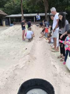 นักท่องเที่ยวตะลึงเต่ากระฟักไข่  99 ฟอง ที่ชายหาดเกาะทะลุ