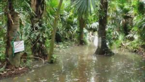 """น่าห่วง น้ำท่วม """"คำชะโนด"""" แนวโน้มสูงขึ้น จมหมดเหลือเพียงศาลปู่ศรีสุทโธ-บ่อน้ำศักดิ์สิทธิ์"""