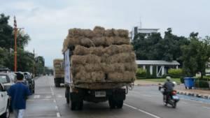 ปศุสัตว์อุดรฯ ขนหญ้าช่วยชีวิตวัว-ควายพื้นที่น้ำท่วมสกลนคร