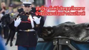 กองทัพสหรัฐฯจัดพิธีเชิดชูสุนัขทหารอายุ 10 ปี ป่วยเป็นมะเร็งอย่างสมเกียรติ (ชมคลิป)