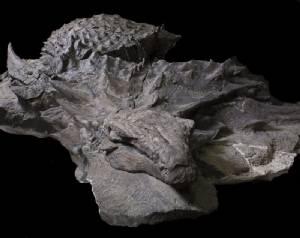 ตั้งชื่อไดโนเสาร์ร่างสวยตามคนทุ่มเวลาขุดฟอสซิลนาน 7,000 ชั่วโมง