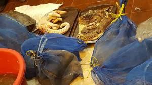 บุกภัตตาคารย่านวังทองหลางลักลอบขายอาหารทำจากสัตว์ป่าคุ้มครอง เจอเพียบ ทั้งงู-ตะพาบ-เต่า