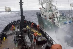 """สู้ไม่ไหว! """"ซีเชปเพิร์ด"""" หยุดส่งเรือขวางญี่ปุ่น """"ล่าวาฬ"""" หลังต่อสู้มา 12 ปีเต็ม"""