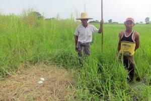 นักอนุรักษ์เป็นปลื้มเจอนกกระเรียนไทยในเขตที่ราบใหญ่อิรวดี