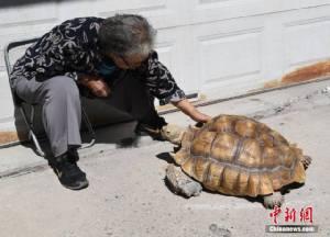 """คุณยายเลี้ยง """"เต่ายักษ์"""" หนัก 50 กิโลฯ พาออกเดินเล่นตากแดดทุกวัน (ชมคลิป)"""