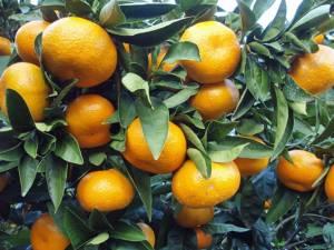 """อ่าน """"ส้ม"""" ในต้นฤดูส้ม"""