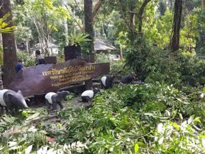 พายุหมุนถล่มน้ำตกโตนงาช้างหนัก เชื่อบารมีทวดน้ำตกคุ้มครองไม่มีคนเจ็บ