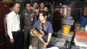จับอาสากู้ภัยชอบงู แอบเลี้ยงงูหลามทอง-งูหลามไพทอน โดยไม่ได้รับอนุญาต