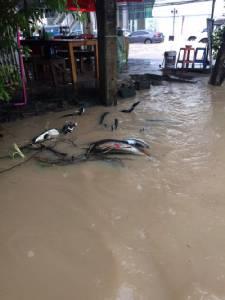 ท่วมอีกแล้ว !!!ฝนตกหนักในพื้นที่ ศรีราชา เกิดน้ำท่วมขัง หลายพื้นที่ (ชมคลิป)