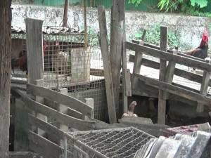 หนุ่มตรังโอดน้ำท่วมหนัก สัตว์เลี้ยงหาย วอนช่วยตามคืนเพราะเลี้ยงไว้ขายเป็นค่าเทอมลูก