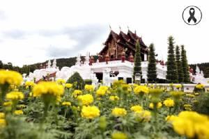 """ดอกไม้เหลืองสะพรั่ง ณ """"อุทยานหลวงราชพฤกษ์"""" น้อมรำลึก ในหลวง ร.๙"""