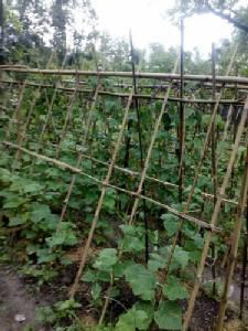 """มารู้จัก """"ไร่สุขสมาน"""" เกษตรกรต้นแบบ ตามแนวทางเกษตรทฤษฎีใหม่ ในหลวง ร.9"""