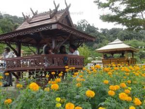 นักท่องเที่ยวแห่ชมสวนดาวเรืองในโครงการไม้ดอกเมืองหนาวอันเนื่องมาจากพระราชดำริ