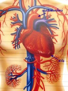 รู้ทัน....โรคหลอดเลือดหัวใจ