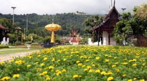 """อุทยานหลวงราชพฤกษ์ชวนชมความงาม """"ดอกแดฟโฟดิว""""ดอกไม้แห่งความทรงจำในหลวงรัชกาลที่ 9"""