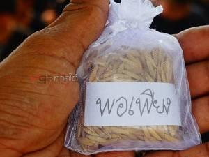 ครู-นักเรียนเทศบาลตำบลตะโหมด นำเมล็ดพันธุ์ข้าวพอเพียงลงหว่านเพาะปลูกในแปลงนา