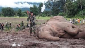 เอาใจช่วยช้างน้อยตกคลอง ทีมสัตวแพทย์ให้น้ำเกลือรอลุ้นให้ยืนได้ เตรียมนำไปรักษาต่อลำปาง