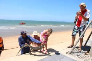 """""""เหี้ย"""" โผล่ลอยคอในทะเลริมหาดจอมเทียน ทำนักท่องเที่ยวแตกตื่น"""