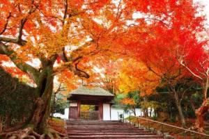 ฤดูใบไม้ร่วงกับวิถีสุขที่พอเพียงของคนญี่ปุ่น