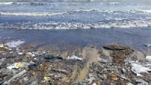 วิกฤตหนักหาดวนอุทยานปราณบุรี คลื่นซัดหอยนับล้านตัวเกยหาดเสริมซากขยะเน่า
