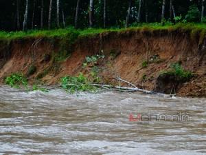 พัทลุงน้ำป่ากัดเซาะตลิ่งพัง ต้นยางล้มหลายสิบต้น เตือนพื้นที่ลุ่มเตรียมรับมือน้ำท่วมคืนนี้
