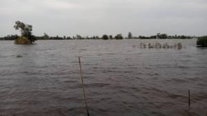 เตือน 8 หมู่บ้านเมืองมหาสารคามขนของไว้ที่สูง หลังน้ำชีเชี่ยวเซาะถนนขาดยังซ่อมไม่ได้