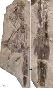 การขุดหาฟอสซิลของสัตว์ดึกดำบรรพ์ในจีน