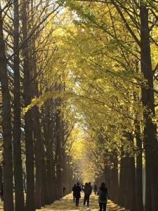 ถนนสายแปะก้วยสีทอง บรรณาการแห่งฤดูใบไม้ร่วง
