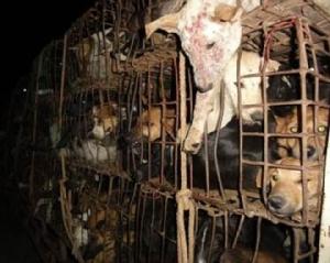 ชีวิตปาฏิหาริย์! หมาจรจัดไทยดังทั่วโลก หลังรอดชีวิตจากขบวนการค้าเนื้อหมาก่อนได้ช่วยเหลือเด็กออทิสติกที่สก็อตแลนด์