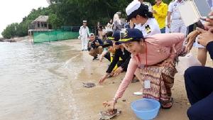 ภริยา ผบ.ทร. มิตรประเทศ-อาเซียน ร่วมปล่อยเต่าทะเลคืนสู่ธรรมชาติ