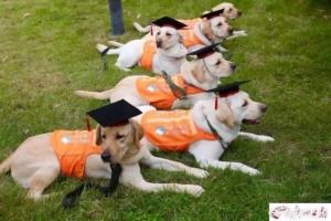 """น่ารักกว่านี้มีอีกไหม! ชมภาพพิธีสำเร็จการศึกษาของ 6 ตูบ สู่โลกกว้างแห่งการเป็น """"สุนัขนำทาง"""""""