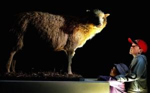 """ย้อนชมภาพ """"ดอลลี่"""" แกะโคลนนิ่งตัวแรกเมื่อครั้งยังเป็นหวานใจของโลก"""