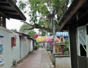 ชาวอัมพวาร้องสื่อผวาต้นมะขามยักษ์โค่นทับบ้าน วอนหน่วยงานช่วยแก้ไข