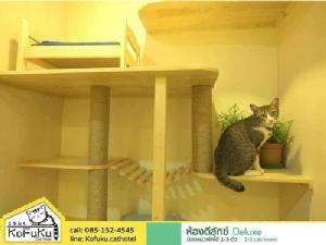"""โดนใจทาสแมว! """"KoFuKu cat hotel"""" โรงแรมน้องเหมียวระดับพรีเมียม"""