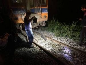 เจอตัวแล้ว..เจ้าของกระบือนอนบนรางจนถูกชนตาย 21 ตัว-รถไฟตกราง