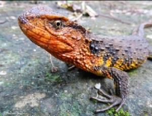 WWF เผยพบอีก 115 ชนิดพันธุ์ สัตว์โลกลี้ลับล่าสุดในลุ่มน้ำโขง