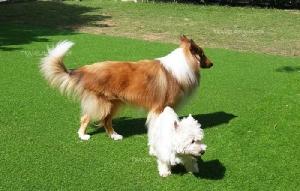"""Dog In Town"" คาเฟ่หมาเก๋ไก๋ ดีต่อใจคนรักหมา"